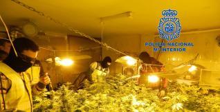 Los ventiladores y los focos son utilizados para acelerar el crecimiento de la marihuana.  C.N.P