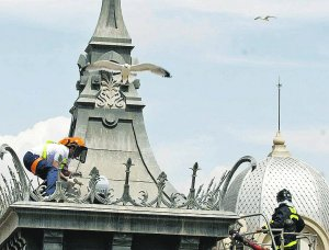 Rtiradada de un nido en una cúpula del Palacio Consitorial, en 2010. ::LV